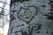 Heart On The Tree
