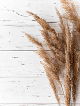 Dry Weeds For Home Decor, Field Plants, Grass, Frame For An Inscription, Wooden White Background, Natural