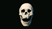 Human Skull On Rich Colors A B...