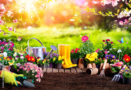 Fotografie, Tablou Spring Gardening - Flowerpots An Equipment In Sunny Garden