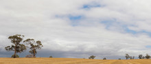 Panorama Of Rural Australian D...