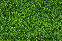 Green Grass Lawn, Top View. Natural Spring Background, Copy Space.