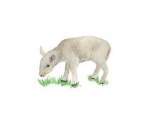 Watercolor Painting A Cute Lamb Isolated On White