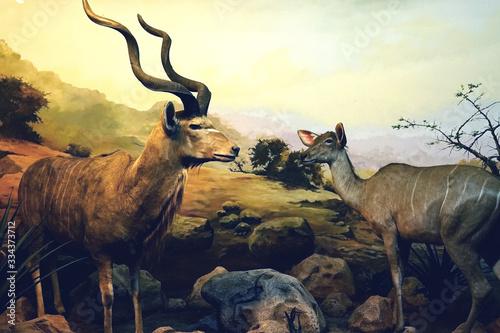 Antelope or Kudu