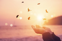 Woman Hands Place Together Like Praying In Front Of Nature Blur Beach And Birds Fly With Sunset Sky Freedom Concept.