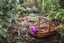 Lilac Poppy Flowers In A Wicker Basket