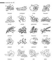Set Of Decorative Plants, Flowers For Essential Oils. Black And White Hand-drawn Objects For Aromatherapy On A White Background. Alternative Medicine Medicine And Cosmetology. Vector Illustration