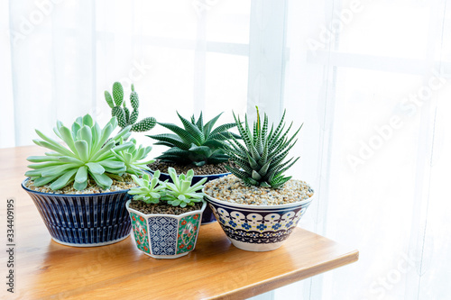Photo Collection of various cactus and succulent plants in different pots