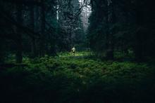Runner In Green Forest Running...