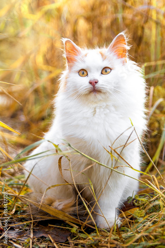 White cat sit on the grass Wallpaper Mural