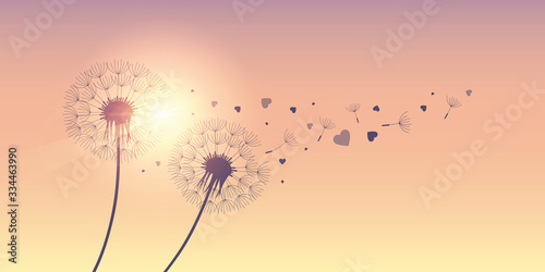 dandelion silhouette with flying seeds and hearts for valentines day vector illu Canvas Print