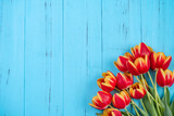 Fototapeta Tulips - Tulip flower bunch, Mother's Day Design Concept - Beautiful Red, yellow bouquet isolated on blue wooden background, top view, flat lay, copy space