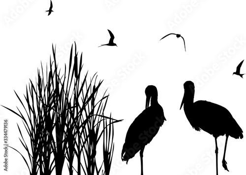 gulls above two storks between black reeds Fototapeta