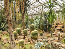 Greenhouse With Cacti And Palm...
