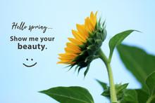 Inspirational Quote - Hello Sp...