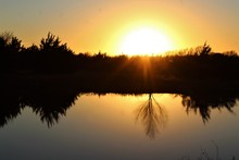The Reflection Of A Tree In A Pond Caused By A Beautiful Golden Oklahoma Sunset