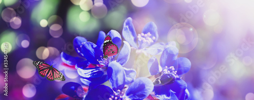 Beautiful butterflies and blooming blue flowers outdoors. Banner design