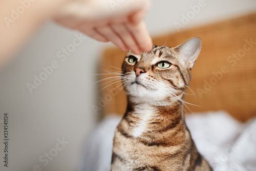 Photo Man woman giving open empty hand palm to tabby cat