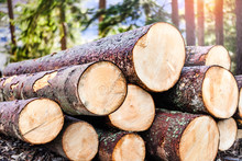 Log Trunks Pile, The Logging Timber Forest Wood Industry. Wooden Trunks