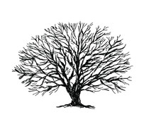 Vector Oak Tree Silhouette Illustration Isolated On White Background. Tree Without Leaves.