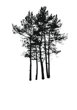 Pine Tree Cluster Silhouette