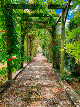 Vine Covered Walkway With No One On Path