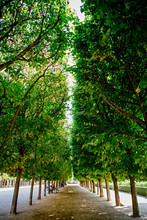 Empty Tree Lined Footpath In P...