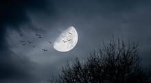 Horror Landscape With Moon And Birds And Bare Trees