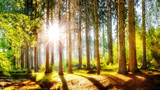 Fototapeta Landscape - Spring forest with brook and bright sun shining through the trees