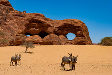Natural Rock Formations In Form Of Arches And Donkeys Lookine At The Camera. Chad, Africa.