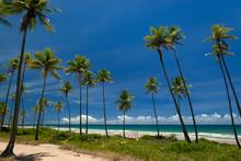 Taipu De Fora Beach, Penisula De Marau,  Sunny Day With Coconut Trees By The Sea, On This Beautiful And Peaceful Beach In Southern Bahia, Brazil On February 23, 2008.