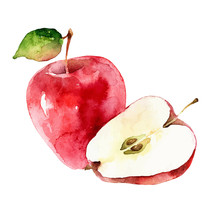 Watercolor Vector Apples On White Background