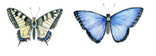 Watercolor Butterflies (Papili...