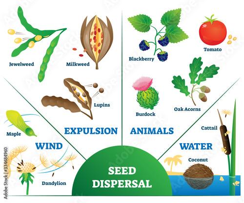 Photo Seed dispersal vector illustration