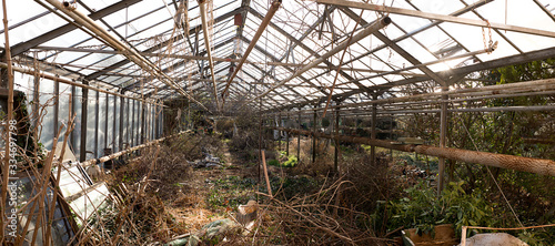 Fotografia Damaged and neglected agriculture greenhouse with plenty of mess and chopped overgrown rose bushes