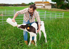 Guy Feeds Two Week Old Calf From Bottle With Dummy At Lawn