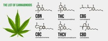 Realistic Vector Illustration Of Cannabis Plant. List Of The Cannabinoids.