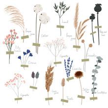 Vector Set Of Boho Plants. Bea...