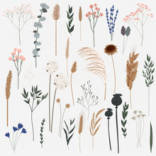 Vector Set Of Boho Plants. Bea...