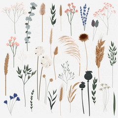 Fototapeta Romantyczny Vector set of boho plants. Beautiful hand drawn wild grass and flowers. Collection of floral elements: pampas grass, poppy heads, lavander, cotton and other. Stylish flat elements for your design