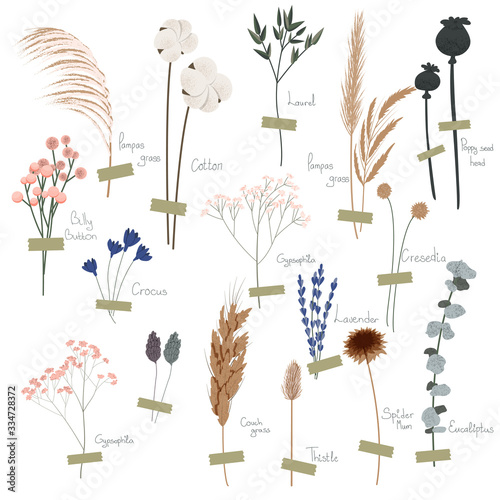 Vector set of boho plants. Beautiful hand drawn wild grass and flowers. Collection of floral elements: pampas grass, poppy heads, lavander, cotton and other. Stylish flat elements for your design - 334728372