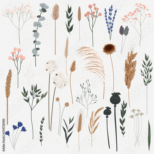 Vector set of boho plants, Beautiful hand drawn wild grass and flowers,