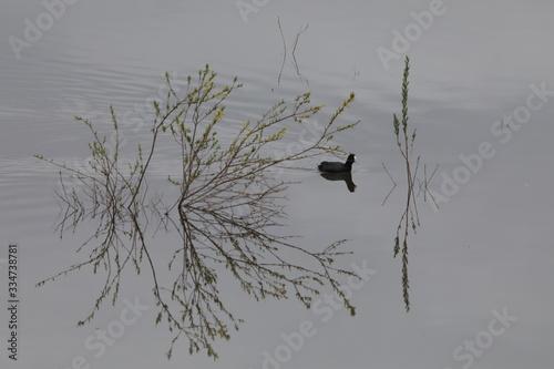 Photo 春の湖上の柳