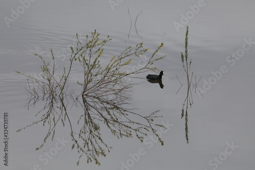 Fotografija 春の湖上の柳