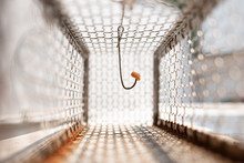 Looking Inside Of Rat Trap Cage