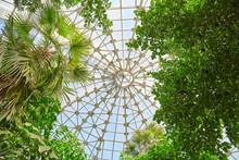 Botanical Garden Glass Ceiling. Donetsk. Ukraine