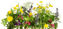 Wild Meadow Flowers Panorama Isoladet On White Background