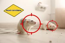 Gun Targets On Rats Indoors An...