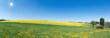Sonnige Wiese mit blühendem Löwenzahn vor einem blühendem Rapsfeld in hügeliger ländlicher Landschaft
