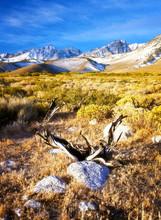 Arid Wilderness Of The Eastern Sierras